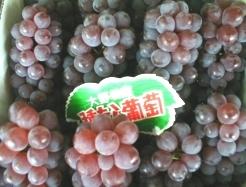 大野葡萄.jpg